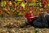 A picker rests under a vineyard